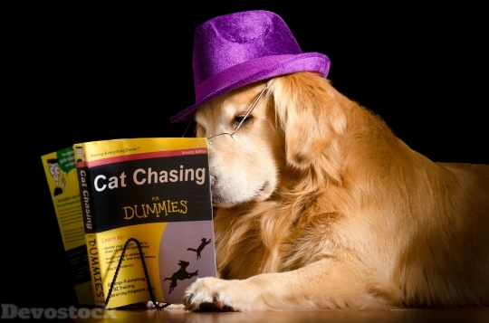 Devostock Funny Dog Learning Cat Book 4K