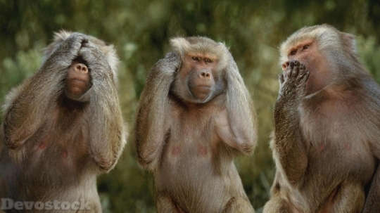 Devostock Funny Three Monkeys Hear Speak See 4K