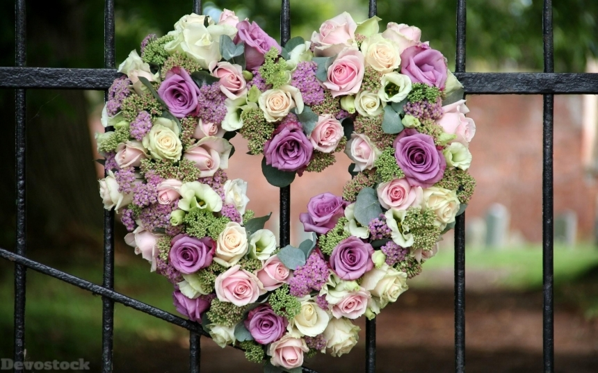 Devostock Gate Nature Beautiful Roses Heart Shape 4k