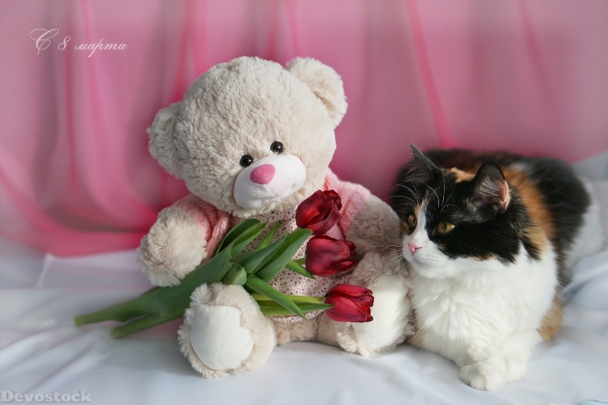 Devostock Holidays March 8 Cats Tulips Teddy Bear Russian 4K