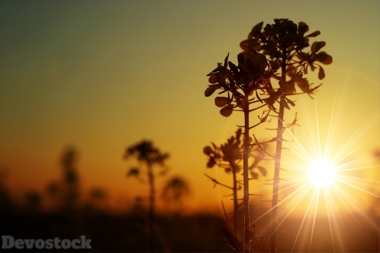 Devostock Lights Sunset Nature 4K.jpeg