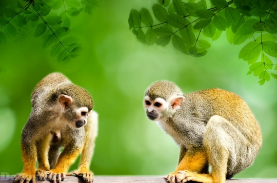 Devostock Monkey Amazon Squirrel Rainforest 4K