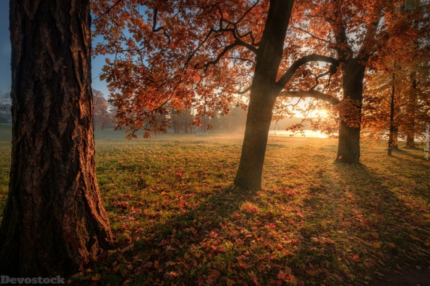 Devostock Nature Autumn Sunset Trees Leaves 4k