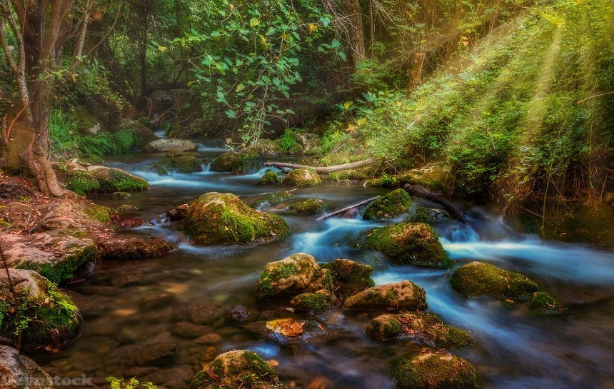Devostock Nature Forests Stones Stream Water Rays Light Moss 4k