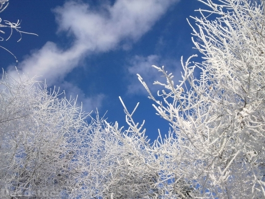 Devostock Nature Frosen Trees White Snow Sky 4k