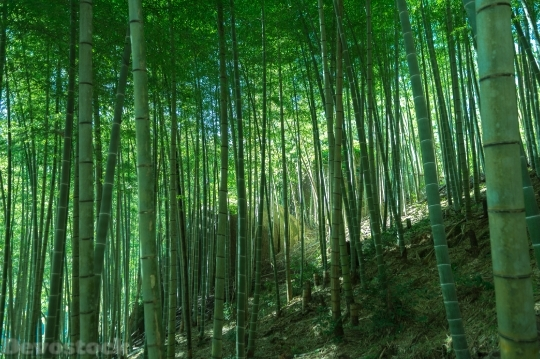 Devostock Nature Green Bamboo Trees 4k