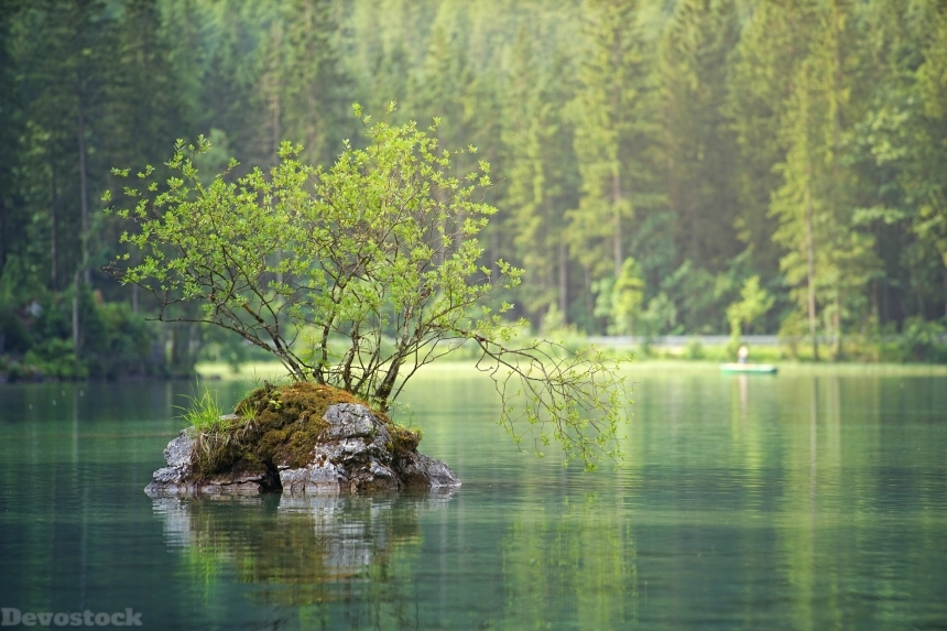 Devostock Nature Lake River Green Water Tree Life 4k
