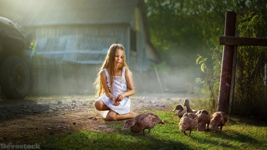Devostock Nature Little Girl Feeding Ducks Shadow Tree Forest 4k