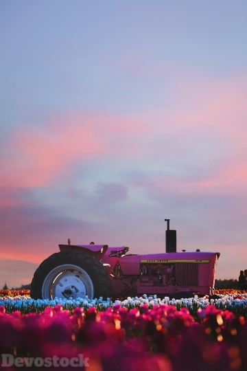 Devostock Nature Tractor Colorful Flowers 4K