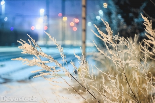Devostock Nature View Cold Winter 4K