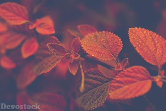 Devostock Nature View Leaves Red 4K