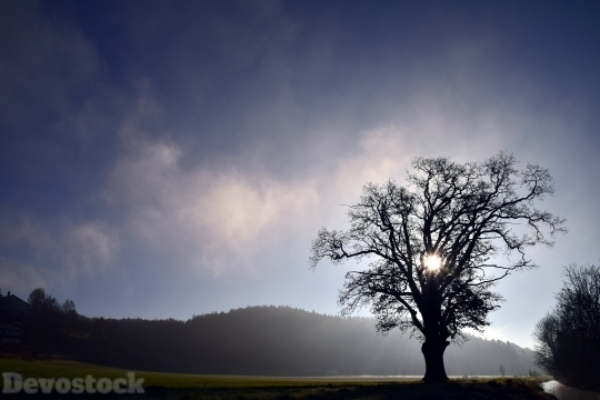 Devostock Nature View Shadow Tree Sky 4K