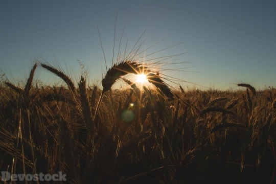 Devostock Nature View Shadow Wheat Field 4K
