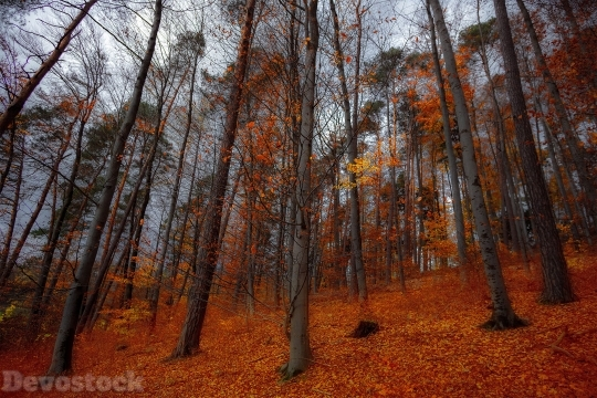Devostock Nature View Trees Red 4K