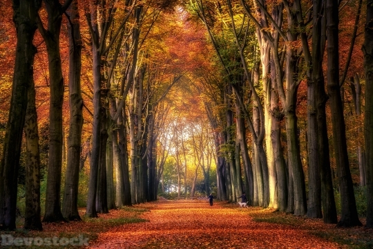 Devostock Nature Wood Autumn 4k