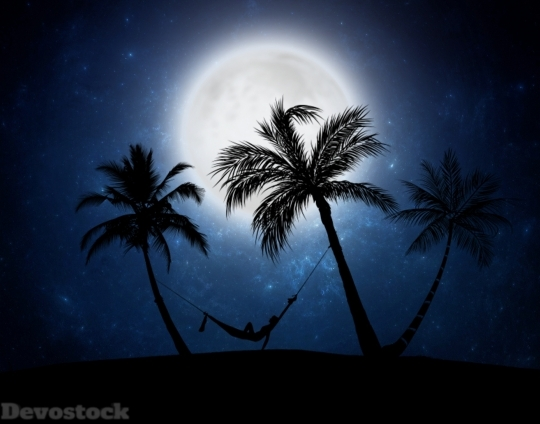 Devostock Nature Wood Night Beach Moon 4k