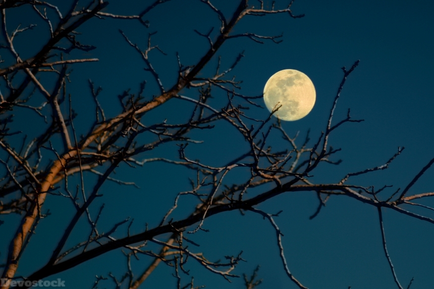 Devostock Night Full Moon Tree Branch 4k