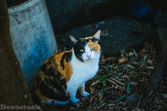 Devostock Outdoor Cat Green Eyes 4k