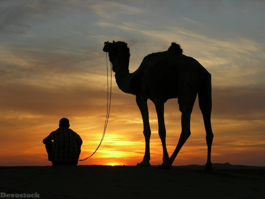 Devostock Outdoor Sky Sunset Desert Camel Man Shadow 4k
