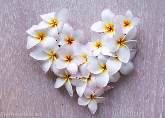 Devostock Plumeria Heart White Flowers