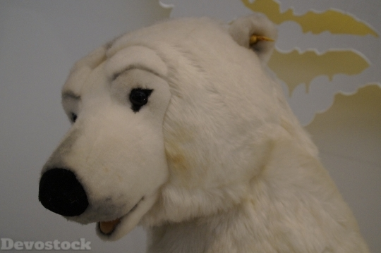 Devostock Polar Bear Bear White 4K