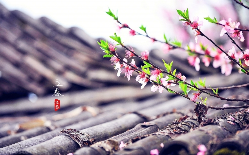 Devostock Rare Flowers Lichun Chinese Old House 4k