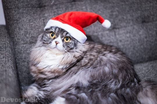 Devostock Santa Claus Cat Christmas  Hat 4k