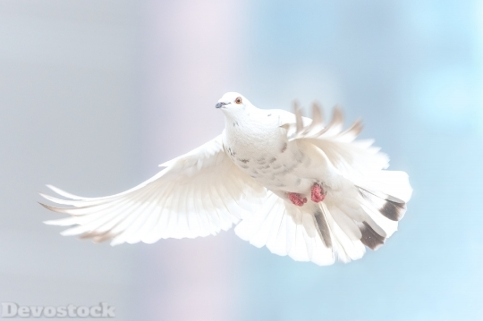 Devostock Sky Flying White Dove 4K