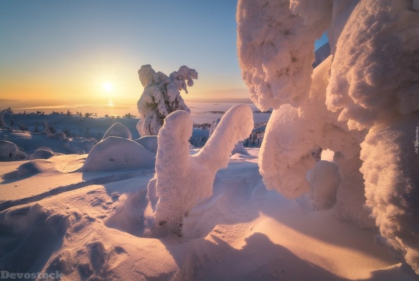 Devostock Trees In The Snow On The Background Of Kandalaksha Bay In Russi 4K