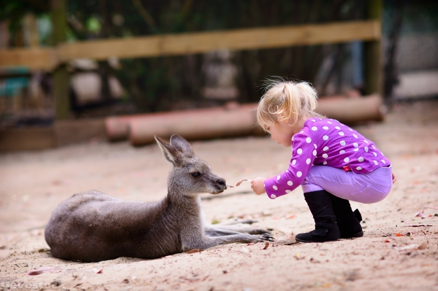 Devostock young girl and kangaroo in the zoo