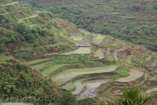 Devostock banauericeterraces-dsc01059