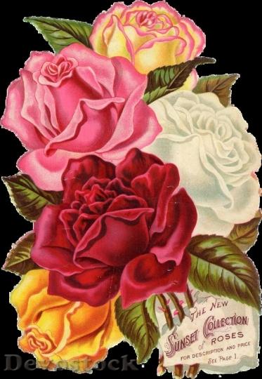 Beautiful Red Rose 92