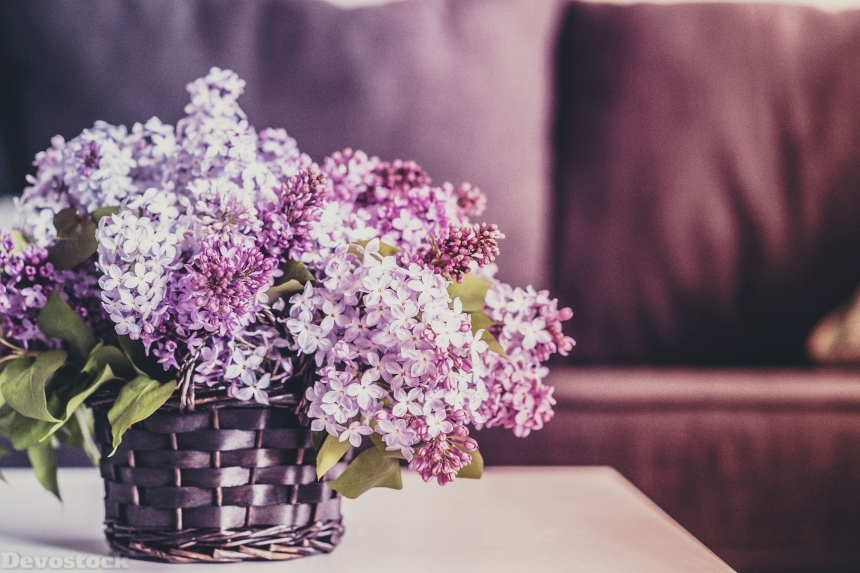 Devostock Beautiful Flowers Colorful 4k
