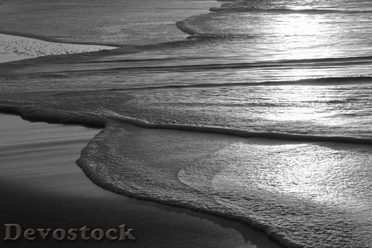 Devostock Sticks Beach Natural Barrier