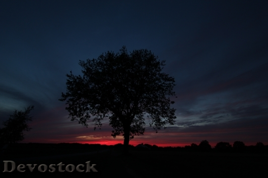 Devostock Tree Evening Twilight Mood