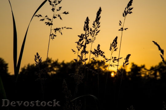 Devostock Twilight Atmosphere Nature Plant