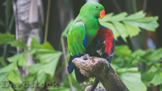 Devostock Different types of parrots with different colors (1)