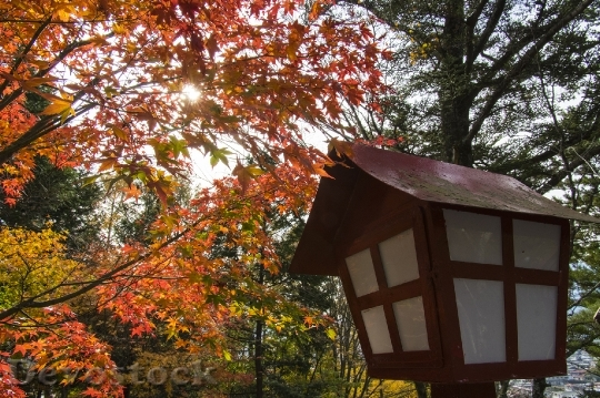 Devostock Free photographs of autumn leaves from Japan  (20)