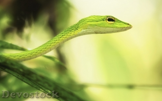 Devostock Rare beautiful green snake  (2)