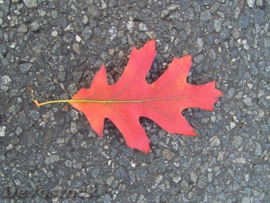 Devostock Autumn Leaf On Road