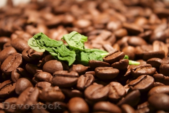 Devostock Basil Coffee Eat Food