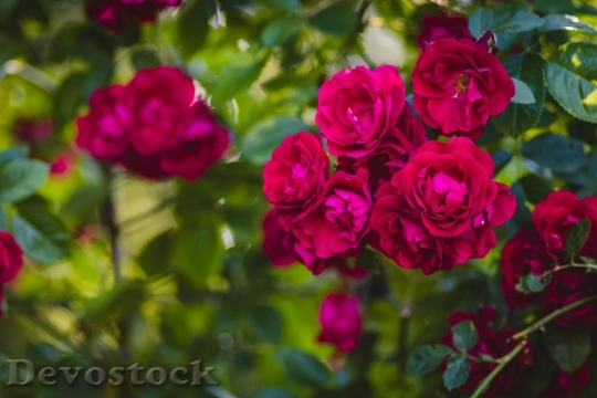 Devostock Romantic Flowers Garden 12597