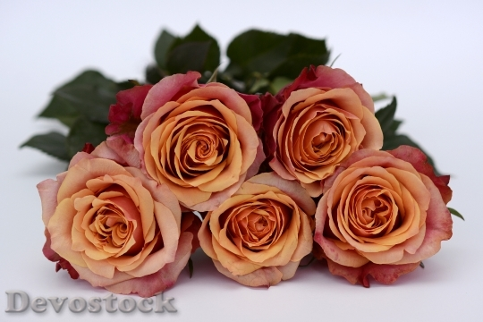 Devostock Romantic Flowers Petals 3590