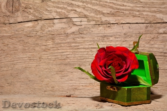 Devostock Rose Red Flower Blossom 4225 4K.jpeg