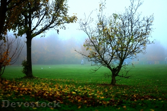 Devostock The Fog Autumn Tree 0